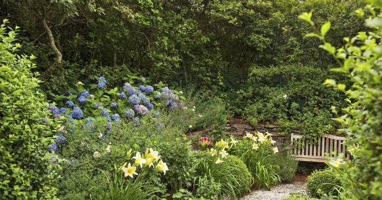 5 Alternatives to Grass Lawns