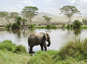 How to Plan a Multi-Destination Trip in Africa