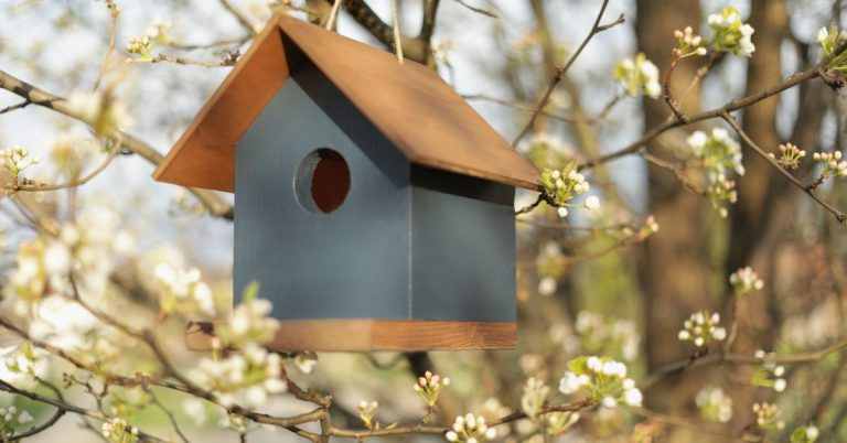 How to Build a Birdhouse | House One