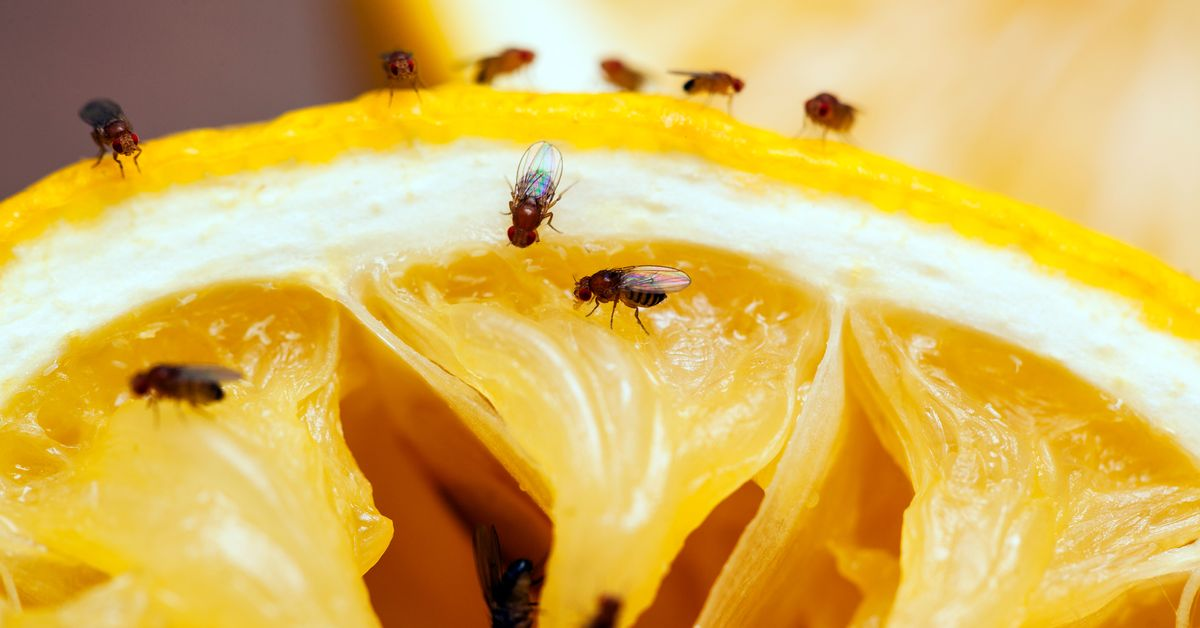 How to Get Rid of Gnats - 5 Ways