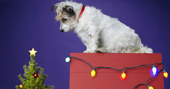 How to Dog Proof Your Home for the Holidays: 8 Tips
