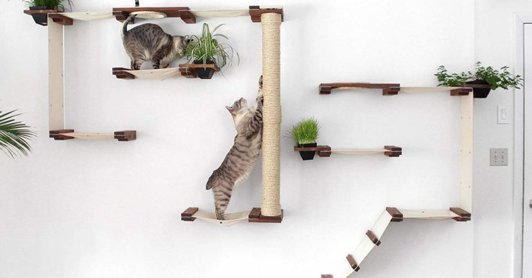 Cat Shelf and Activity Center Shopping Guide